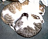 groups/105-cats-lovers/pictures/143834-img-0180.jpg